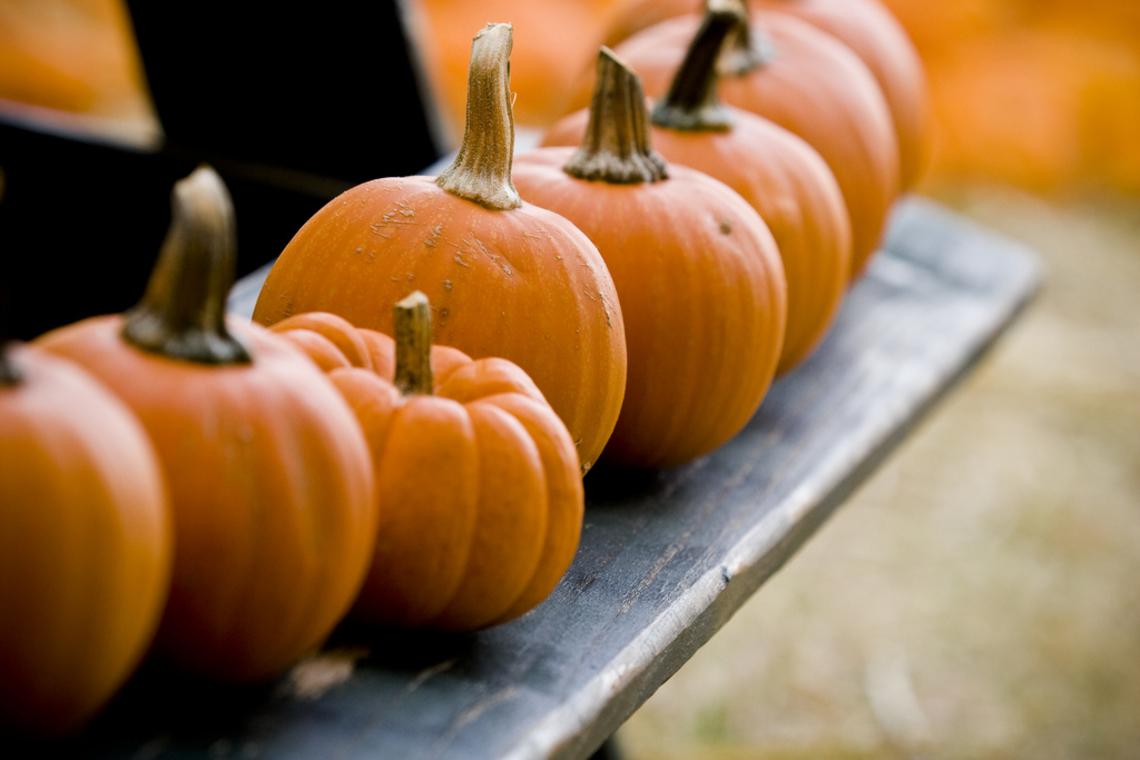 A variety of pumpkins